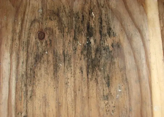 How to Remove Mold from Wood?